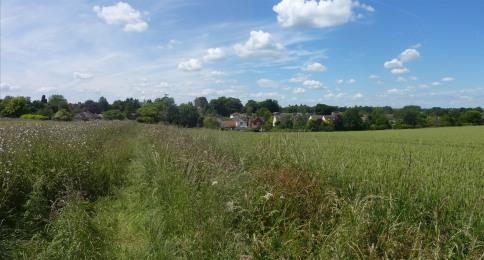 Berden from the fields